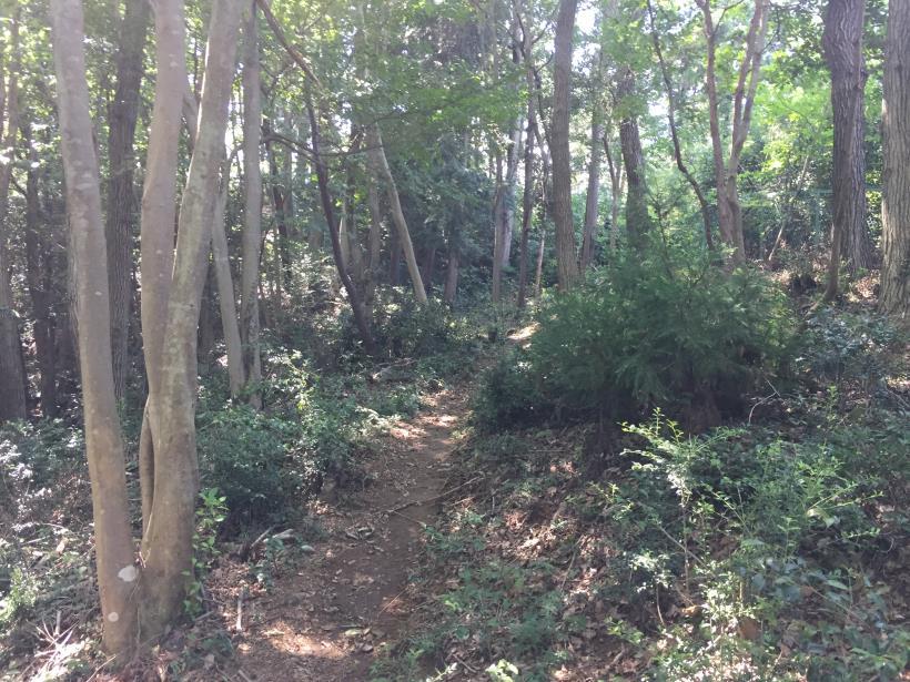 kashiwagiyama37.jpg