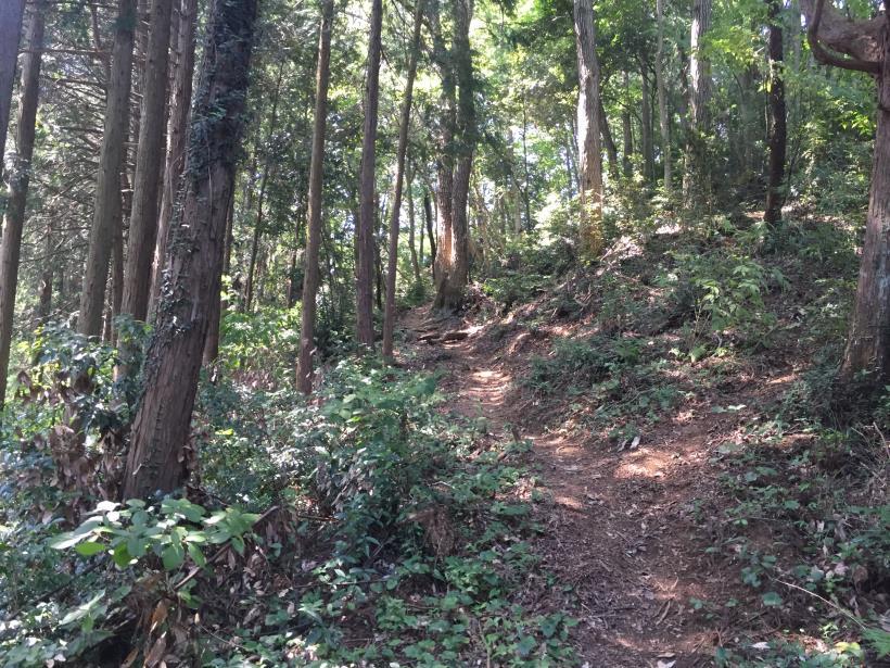 kashiwagiyama40.jpg