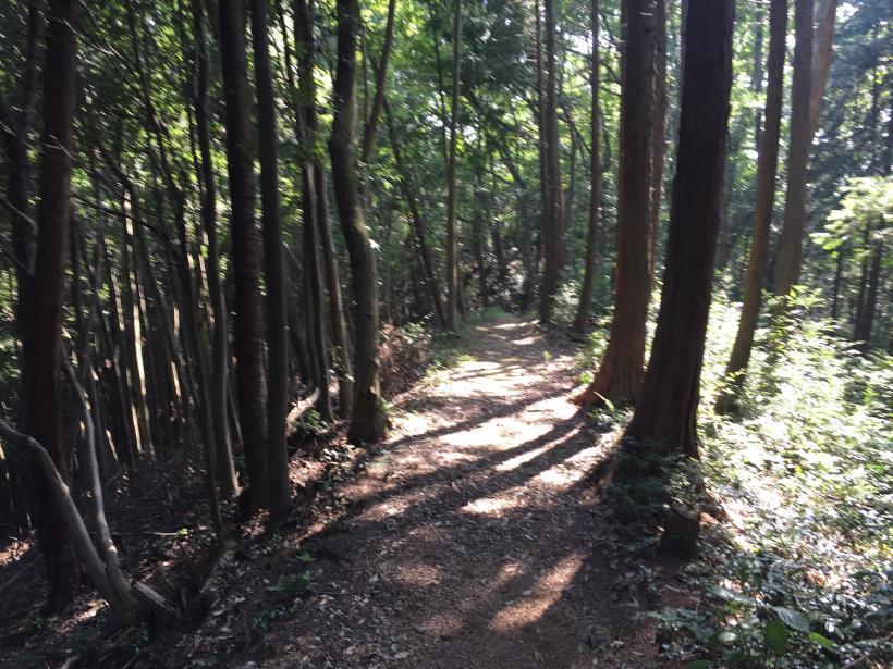kashiwagiyama67.jpg