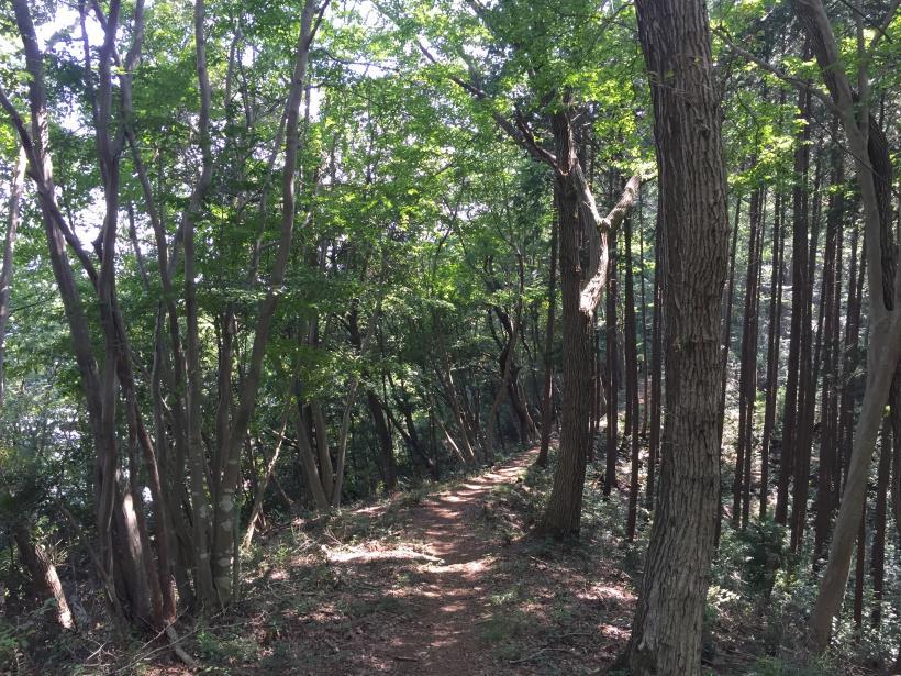 kashiwagiyama70.jpg