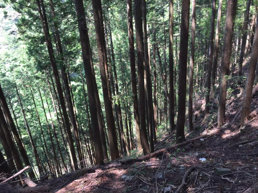 kawanoriyama179.jpg