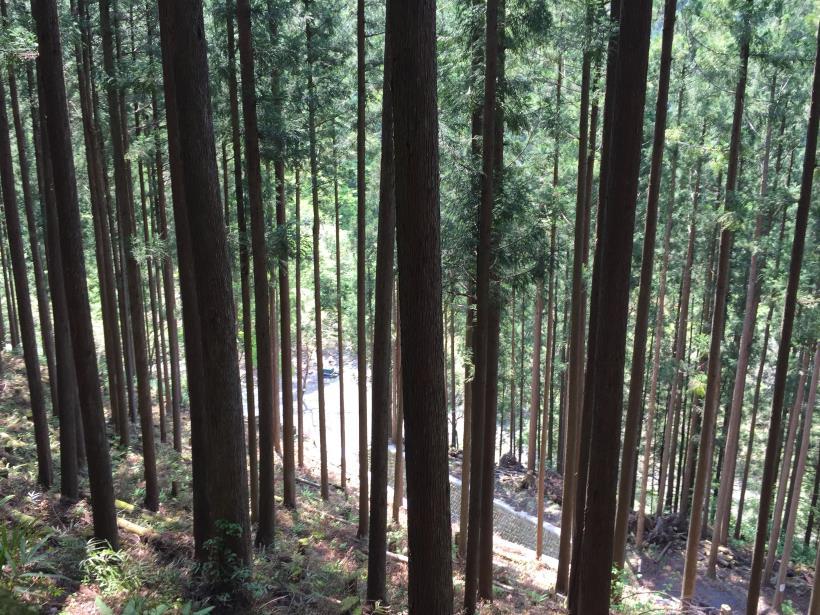 kawanoriyama18.jpg