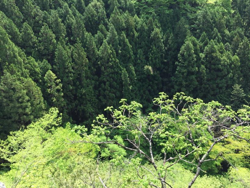 kawanoriyama19.jpg