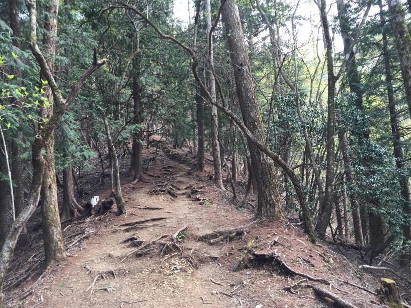 kawanoriyama242.jpg