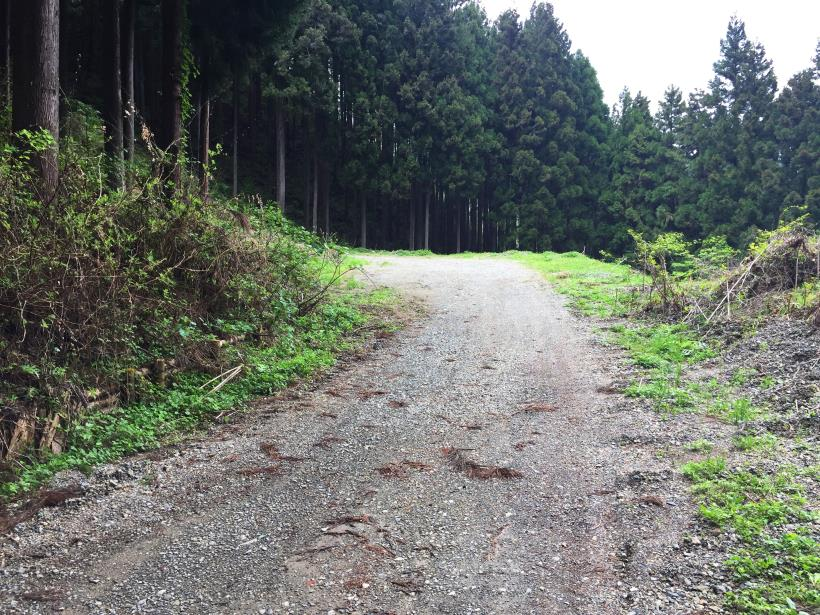 koiwa22.jpg