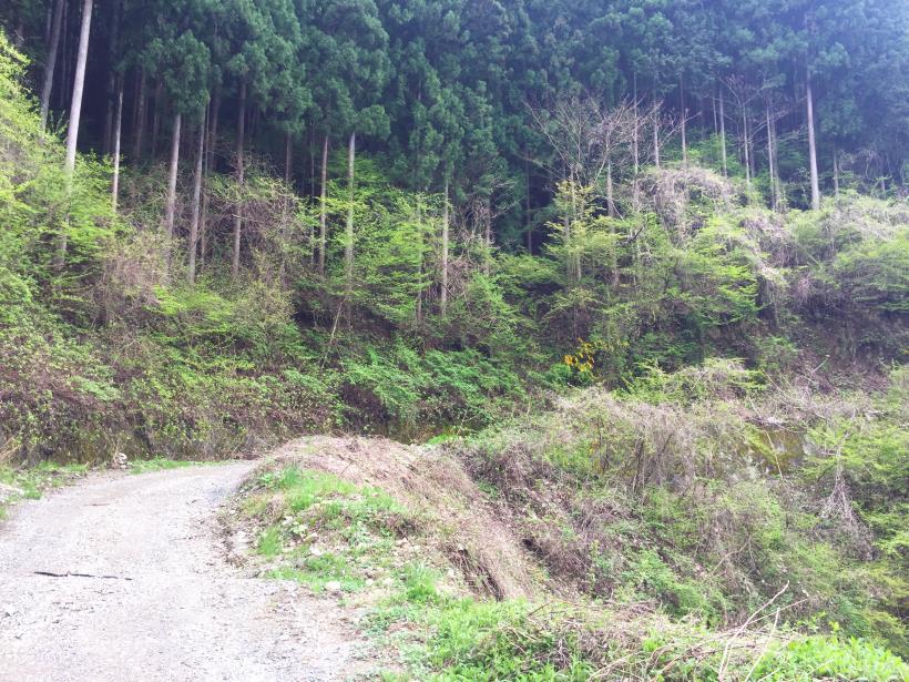 koiwa48.jpg