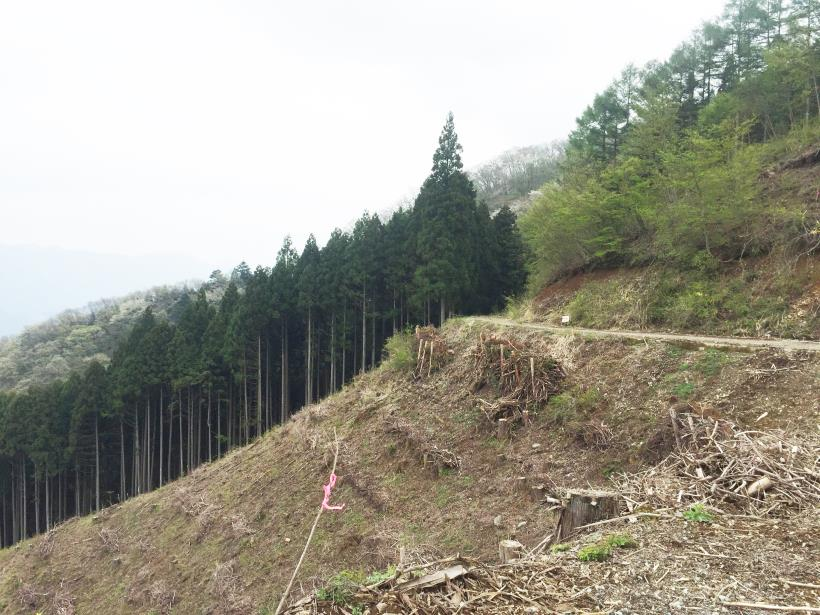 koiwa89.jpg
