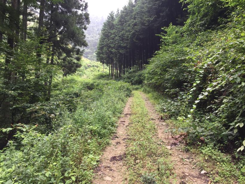 kurahonesawa12.jpg