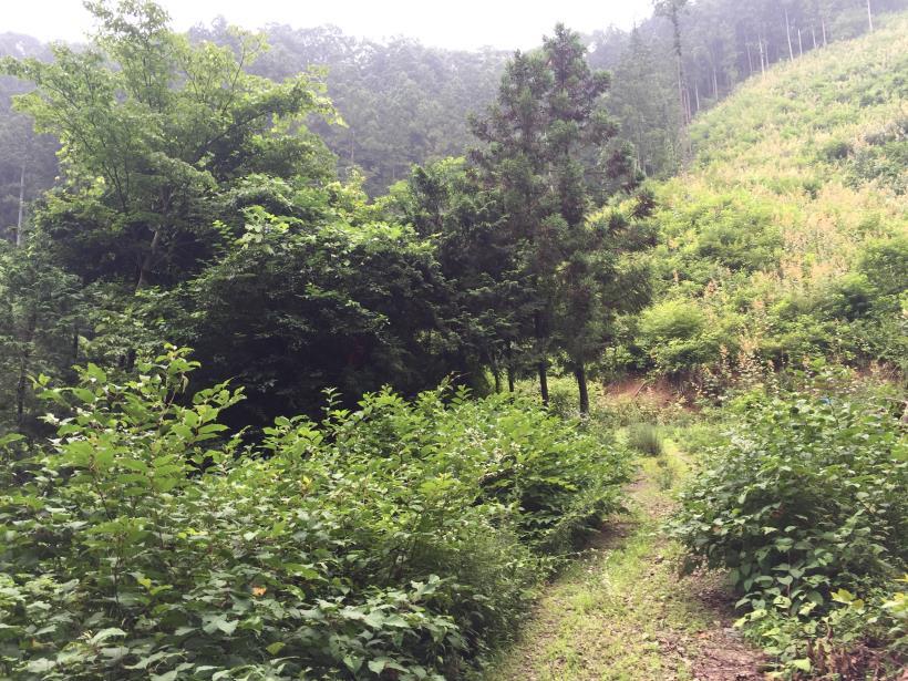 kurahonesawa17.jpg