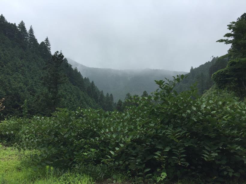 kurahonesawa19.jpg