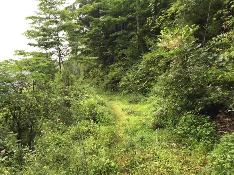 kurahonesawa23.jpg