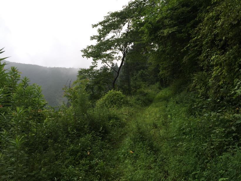 kurahonesawa25.jpg
