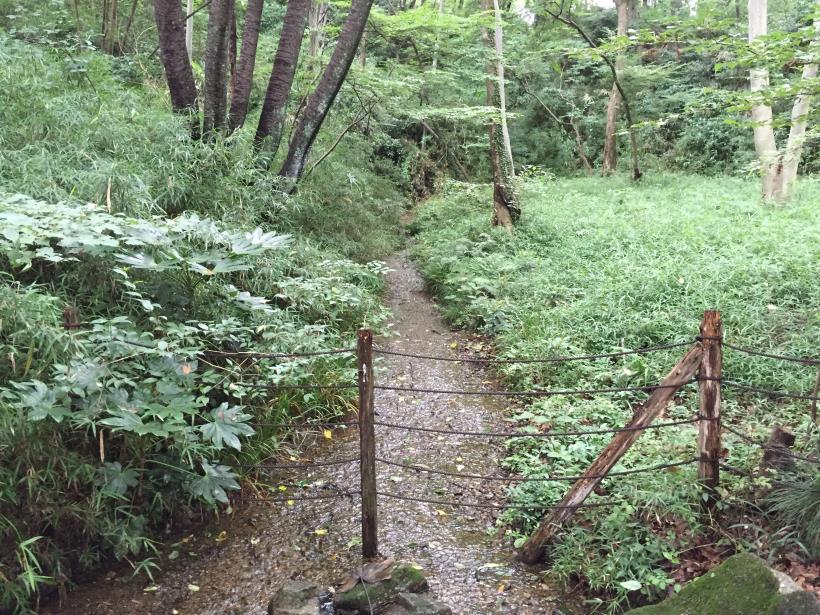 kurokawa15.jpg