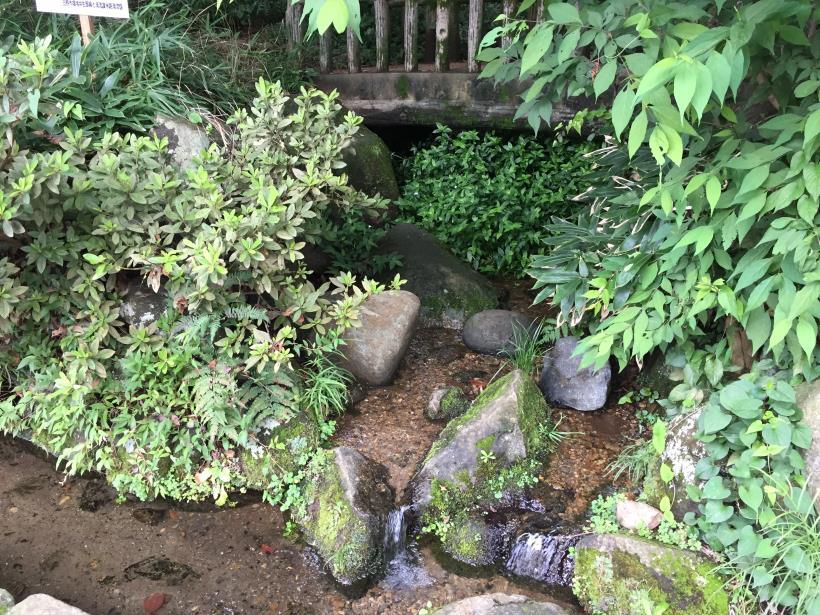 kurokawa22.jpg