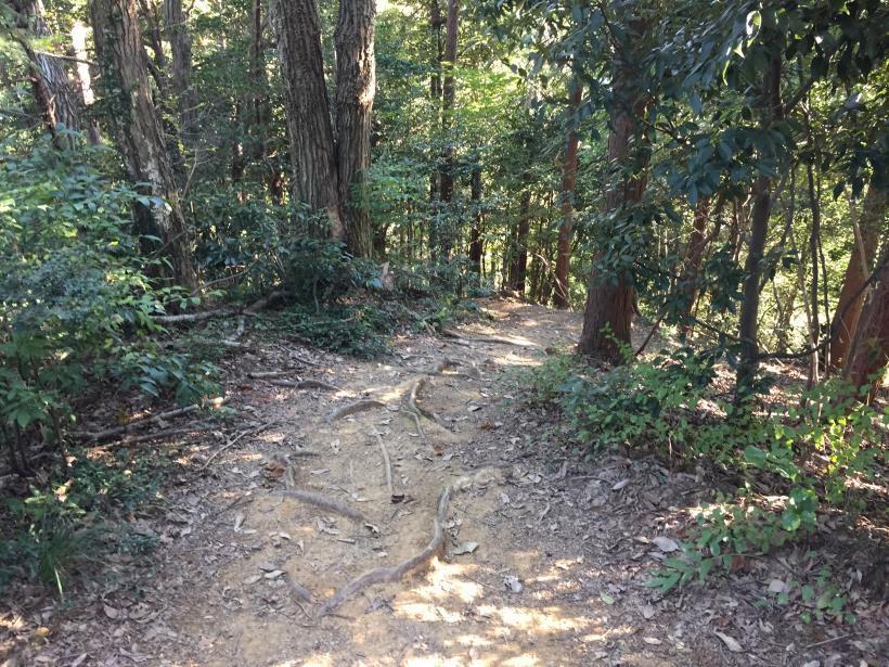 kusatoyamaA117.jpg