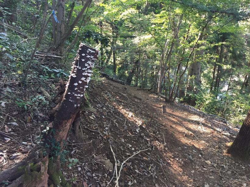 kusatoyamaA131.jpg