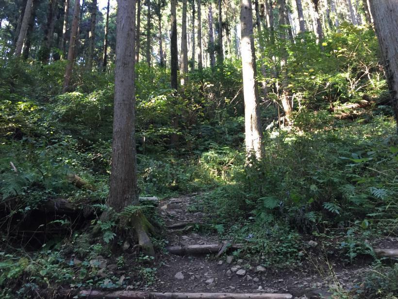 kusatoyamaA28.jpg