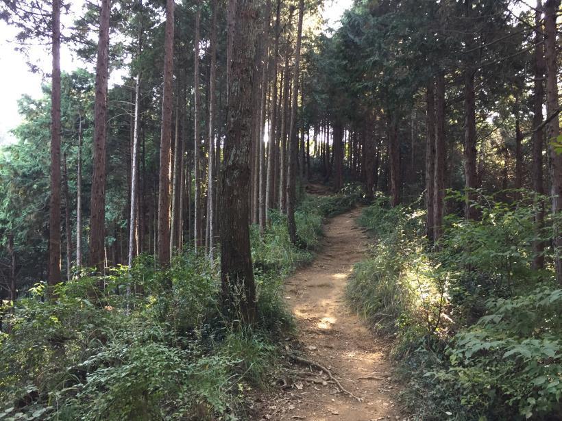 kusatoyamaA65.jpg