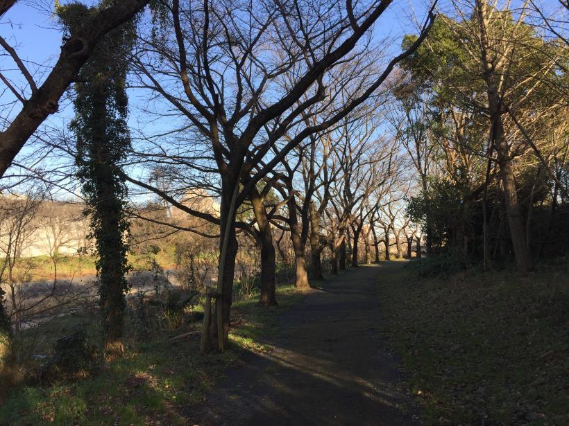 umenokidaizawa138.jpg