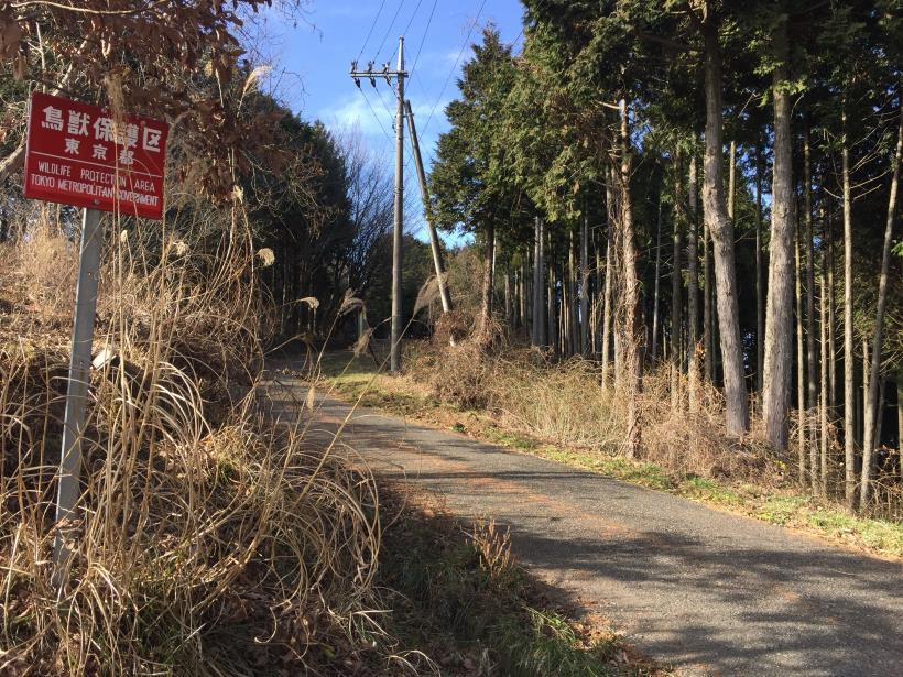 umenokidaizawa22.jpg