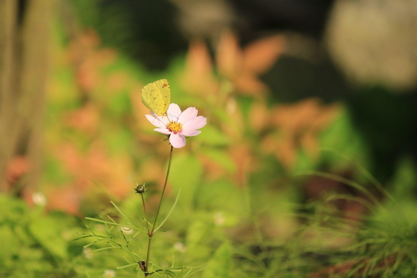 ●ST2016・11・12村松公園_140