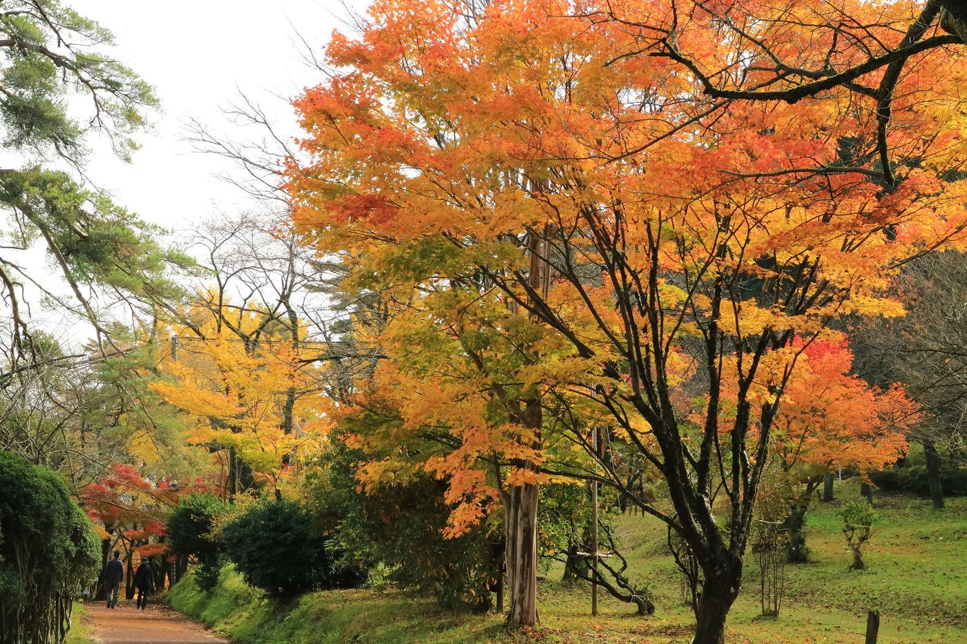 ●SPA2016・11・12村松公園_30