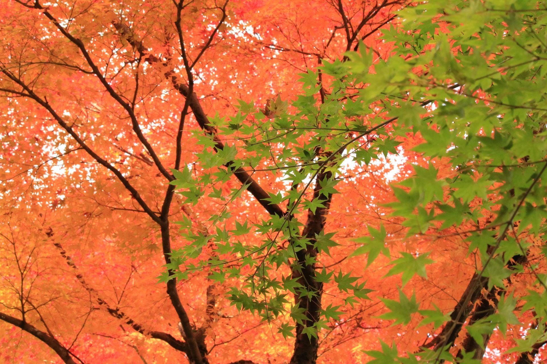 壁紙用2016・11・12村松公園_21