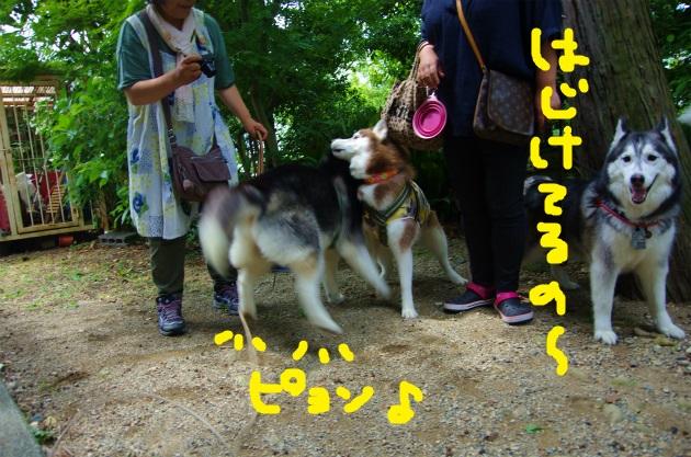 BAAA1401.jpg