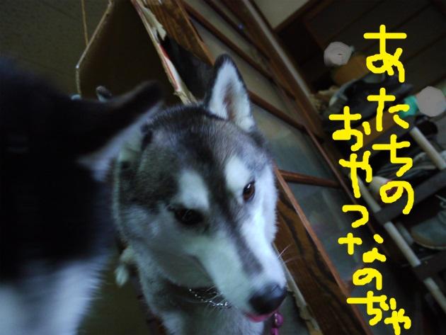 P1870710.jpg