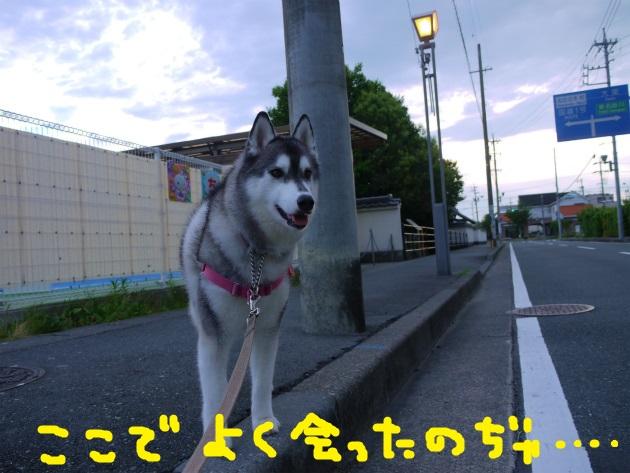 P1920463.jpg