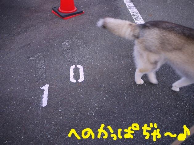 P1960069.jpg