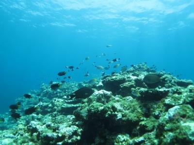 石垣島ツアー2日目 いろいろ魚たち