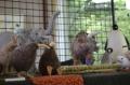 工房暖簾Zoo02