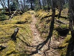 写真 3苔の道-s