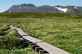 08化雲岳のお花畑とトムラウシ