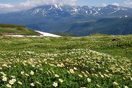 09旭岳とお花畑