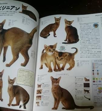 猫のカタログ