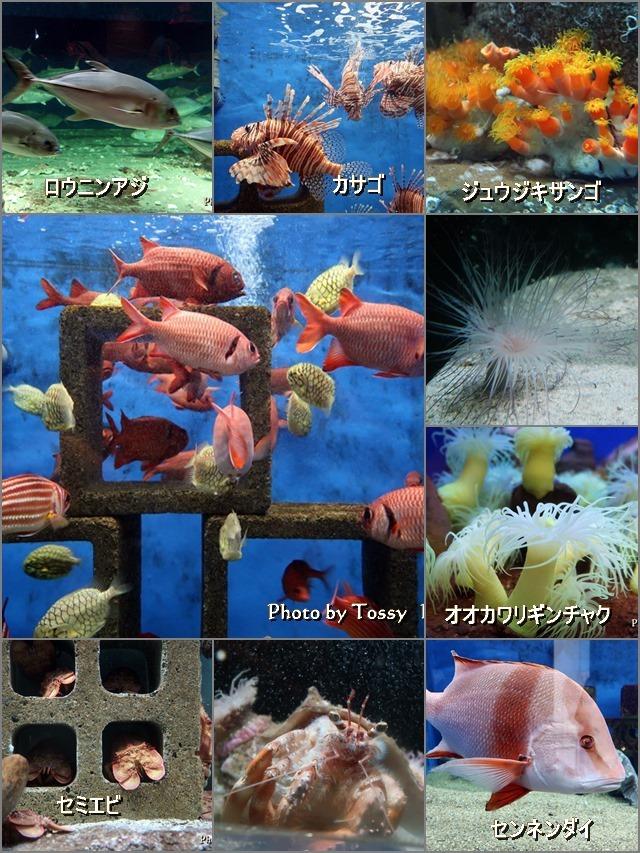 水族館の魚など