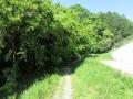 矢田自然の森04