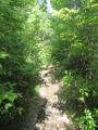 矢田自然の森17