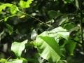矢田自然の森07