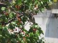 矢田自然の森15