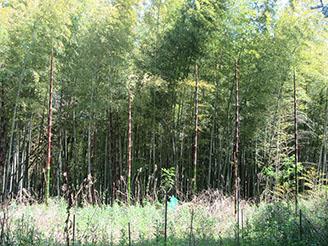 矢田自然の森14