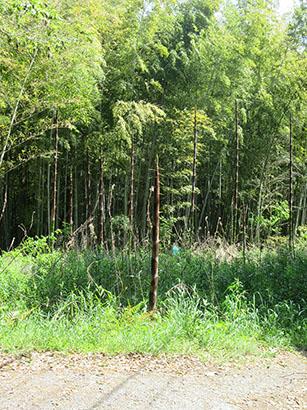 矢田自然の森13