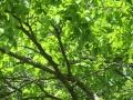 矢田自然の森11