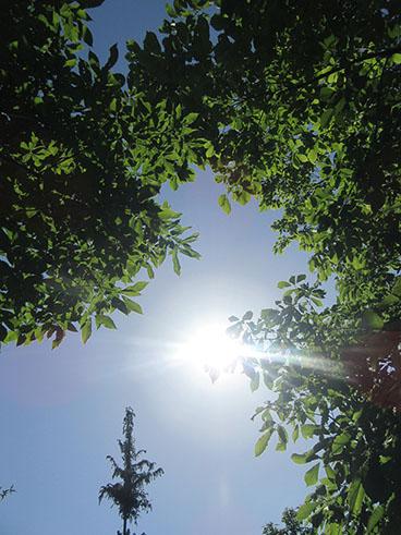 矢田自然の森16