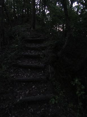 自然の森03