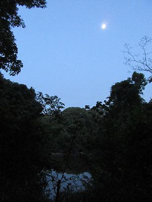 自然の森05