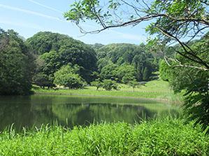 矢田自然の森1
