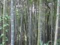 自然の森3